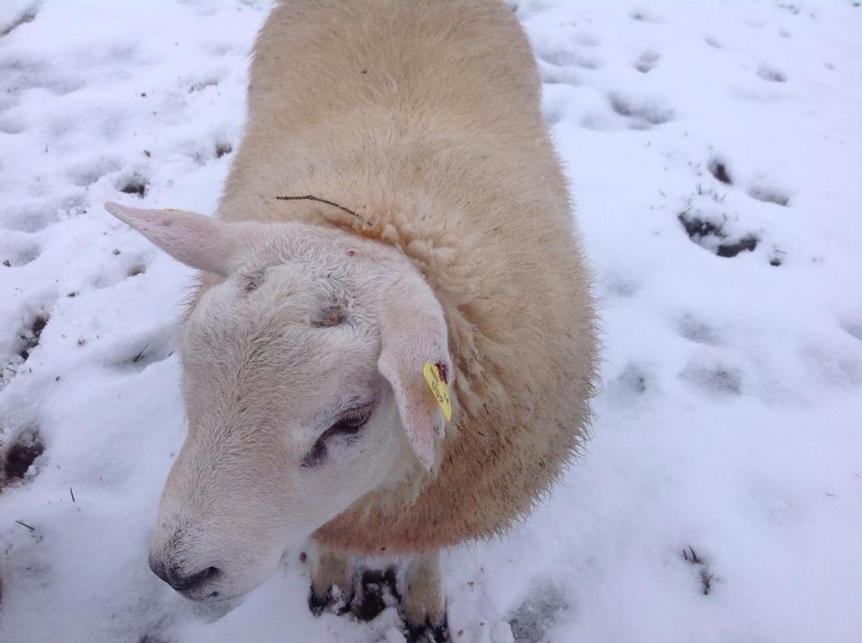 snowkiltullaghkillimordaly28